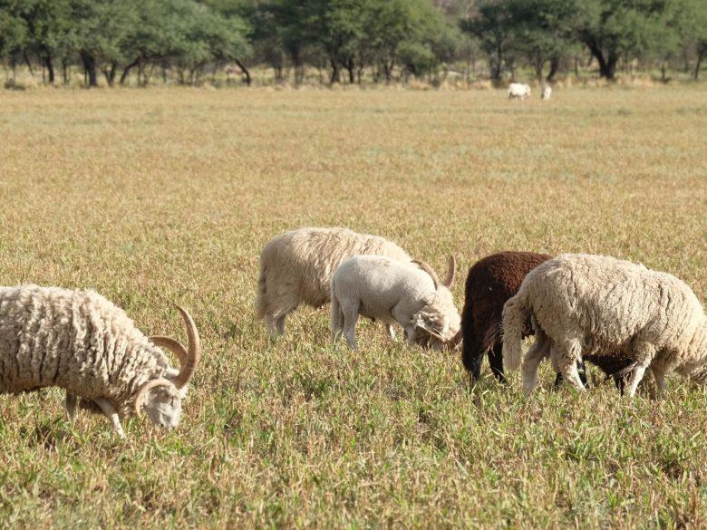multi horns 3